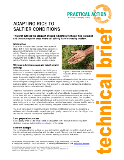 Adapting Rice to Saltier Conditions