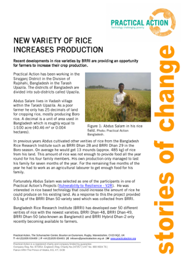 New Variety of Rice Increases Production