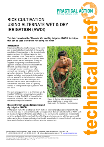 Rice Cultivation Using Alternate Wet and Dry Irrigation (AWDI)