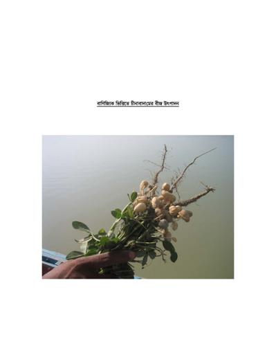বাণিজ্যিক ভিত্তিতে চীনাবাদামের বীজ উৎপাদন